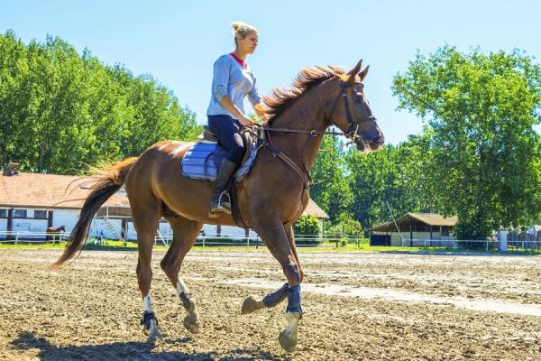 Paardrijcentrum